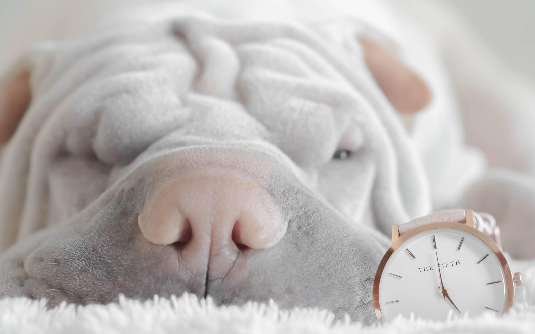 Как научиться хорошо высыпаться
